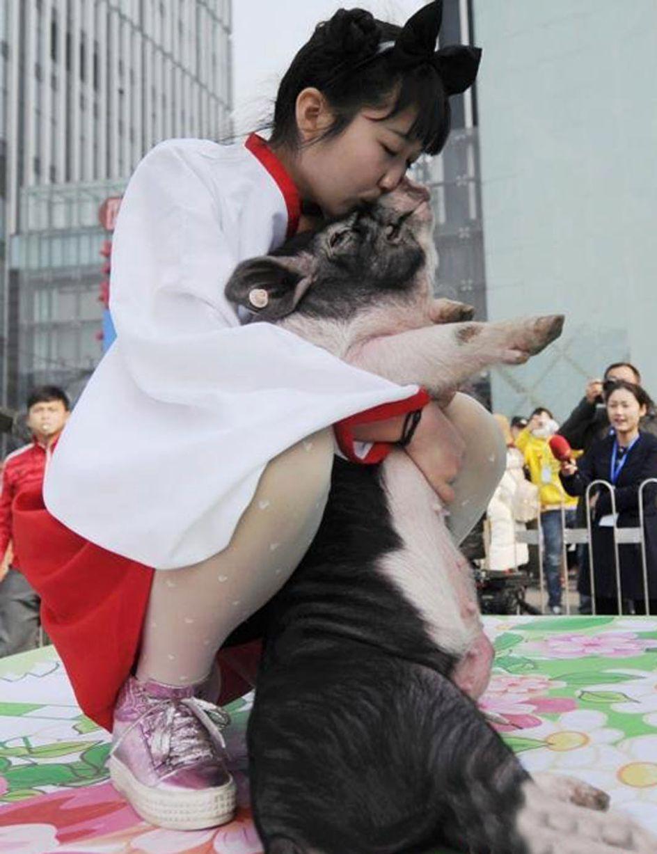 Trung Quốc: Thưởng Tết bằng... lợn - 2