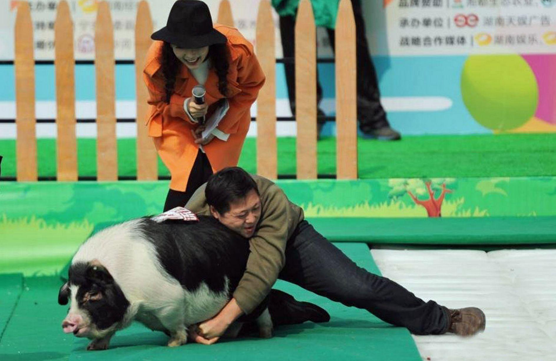 Trung Quốc: Thưởng Tết bằng... lợn - 3