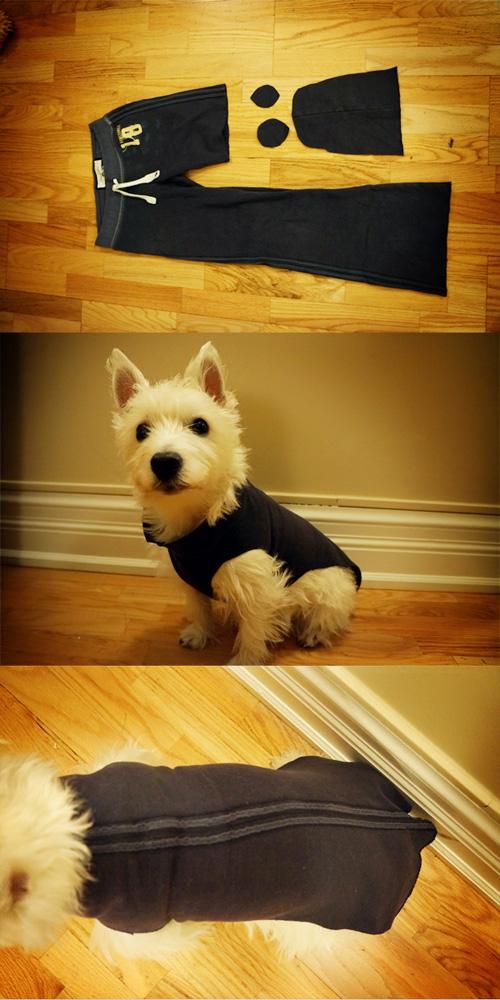 Chế quần áo cũ thành trang phục cho cún cưng diện Tết - 2