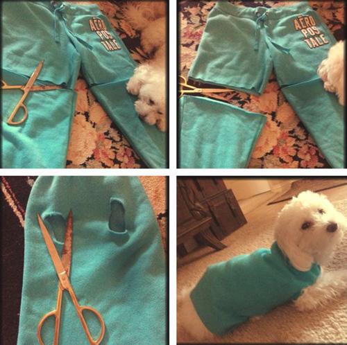 Chế quần áo cũ thành trang phục cho cún cưng diện Tết - 3