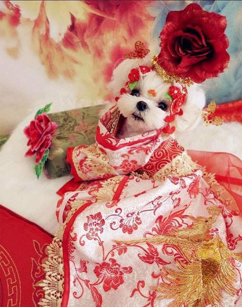 Thời trang chó mèo cận tết: Bạc triệu vẫn đắt hàng - 4