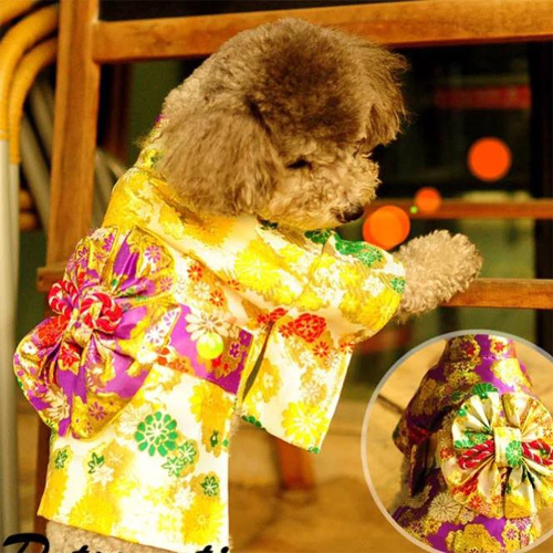 Thời trang chó mèo cận tết: Bạc triệu vẫn đắt hàng - 6