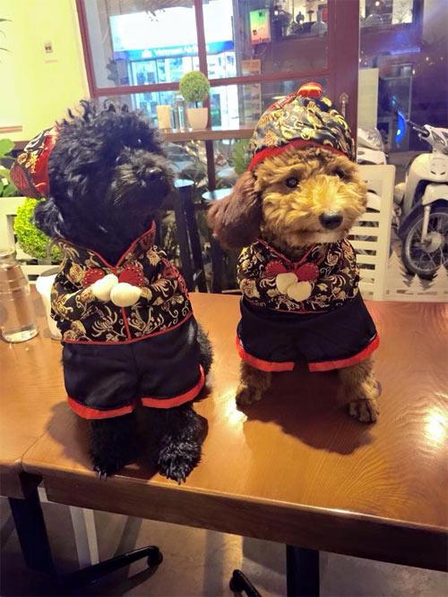 Thời trang chó mèo cận tết: Bạc triệu vẫn đắt hàng - 8