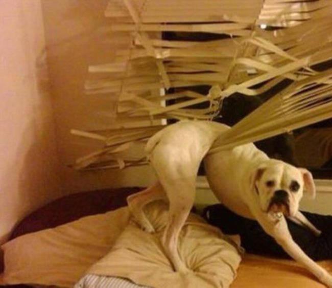 """Những tai nạn """"khó đỡ"""" của cún cưng - 2"""