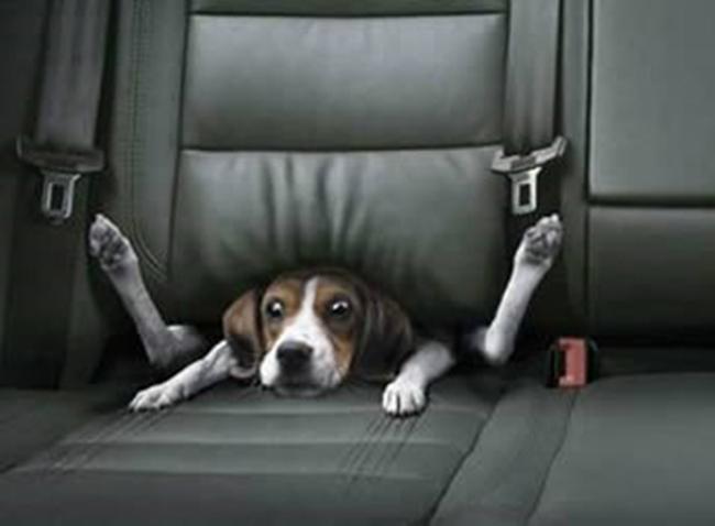 Cười té ghế với những pha mắc kẹt của cún cưng - 9