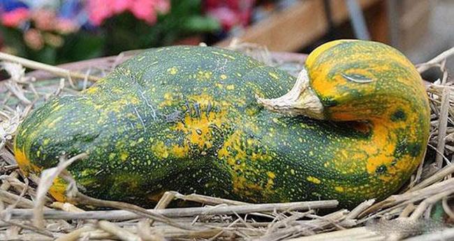 Những tạo hình độc đáo của rau củ quả - 9