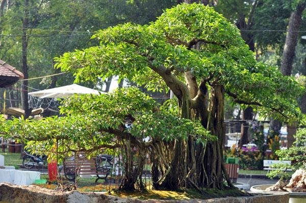"""Chiêm ngưỡng những """"ngọn núi"""" giữa trung tâm Sài Gòn - 2"""