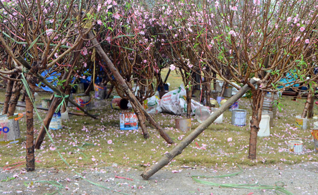 Chợ hoa xuân Hạ Long: Đào, mai tan tác dưới mưa rào - 8
