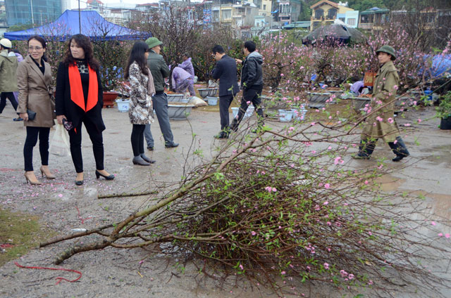 Chợ hoa xuân Hạ Long: Đào, mai tan tác dưới mưa rào - 10