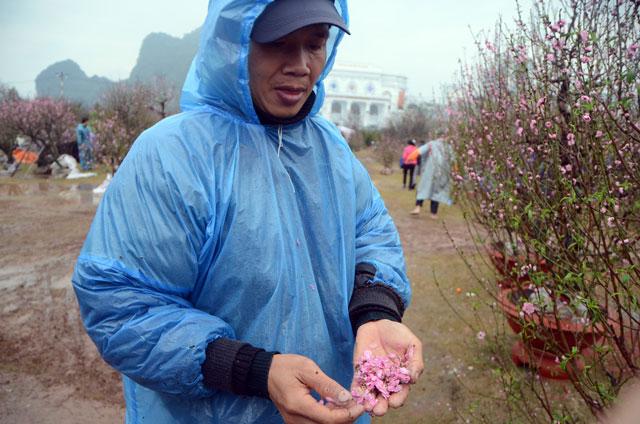 Chợ hoa xuân Hạ Long: Đào, mai tan tác dưới mưa rào - 9