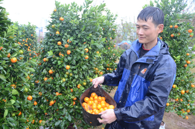 Chợ hoa xuân Hạ Long: Đào, mai tan tác dưới mưa rào - 6