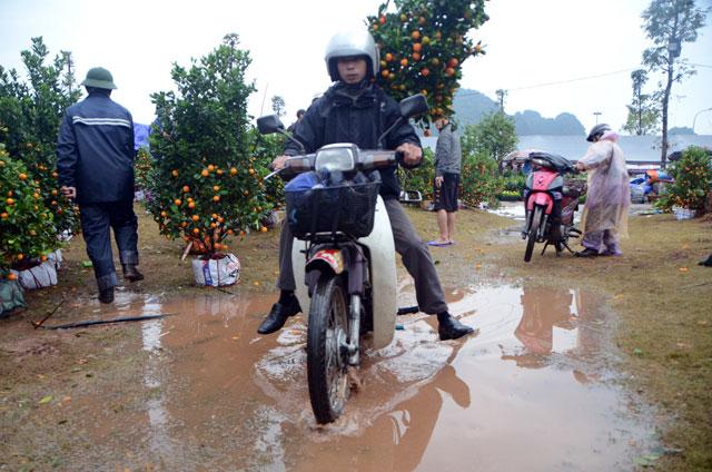 Chợ hoa xuân Hạ Long: Đào, mai tan tác dưới mưa rào - 7