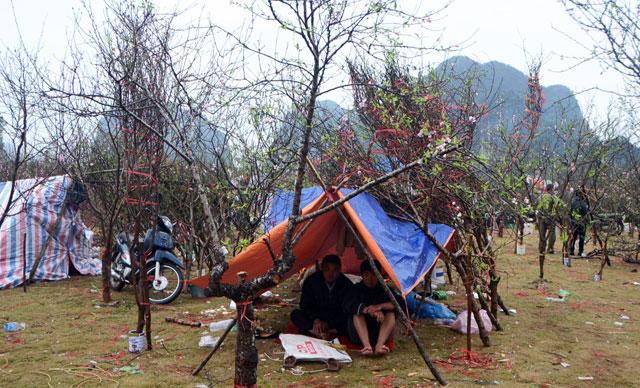Chợ hoa xuân Hạ Long: Đào, mai tan tác dưới mưa rào - 11