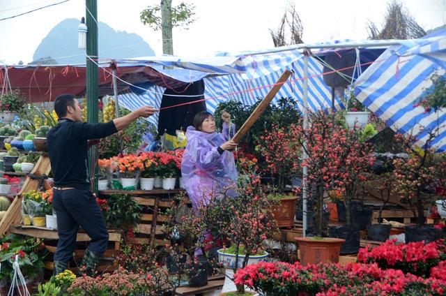 Chợ hoa xuân Hạ Long: Đào, mai tan tác dưới mưa rào - 17