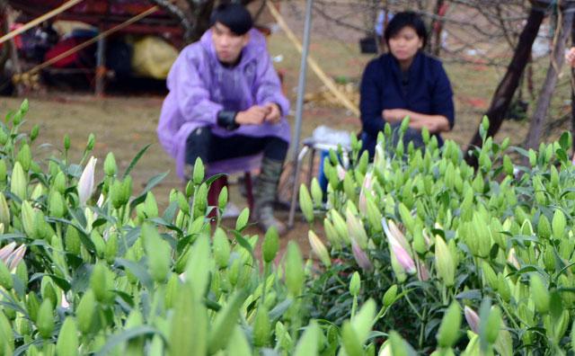 Chợ hoa xuân Hạ Long: Đào, mai tan tác dưới mưa rào - 18