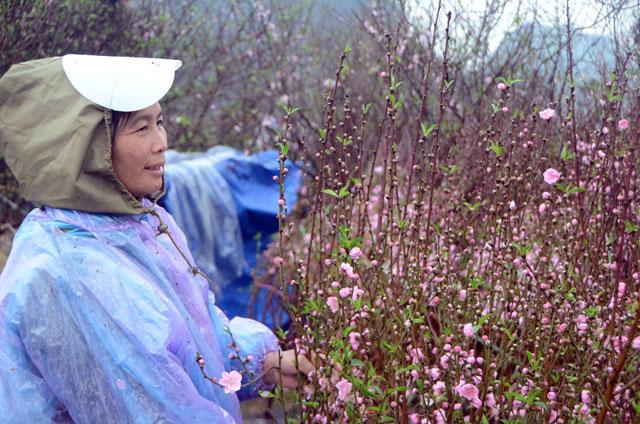 Chợ hoa xuân Hạ Long: Đào, mai tan tác dưới mưa rào - 13