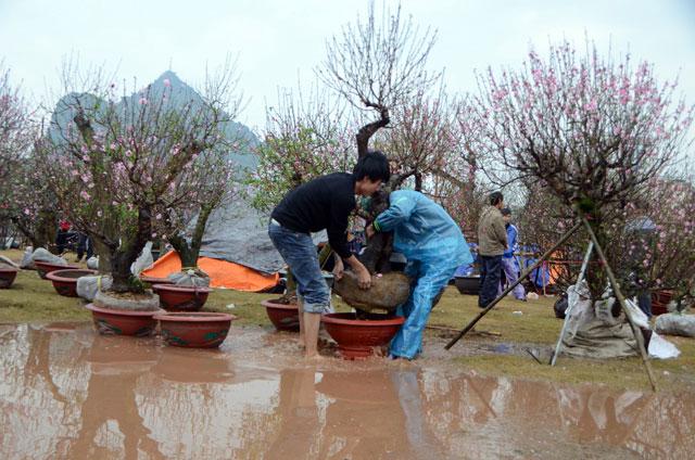 Chợ hoa xuân Hạ Long: Đào, mai tan tác dưới mưa rào - 1