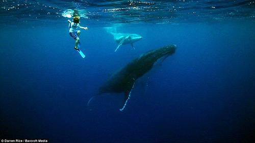 Tình bạn tuyệt vời của những đứa trẻ và cá voi - 4