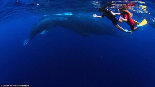 Tình bạn tuyệt vời của những đứa trẻ và cá voi - 3