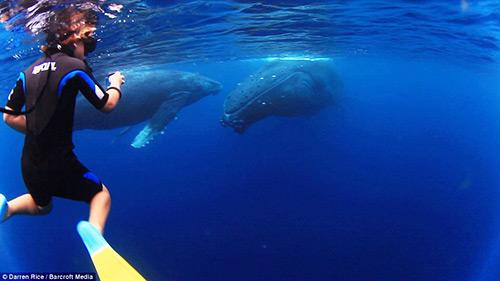 Tình bạn tuyệt vời của những đứa trẻ và cá voi - 2