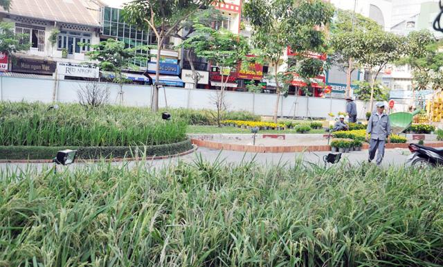 Ảnh: Làng quê thanh bình giữa trung tâm Sài Gòn - 1