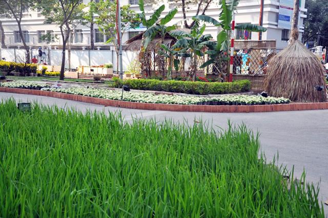 Ảnh: Làng quê thanh bình giữa trung tâm Sài Gòn - 21