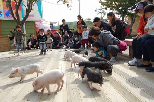 Thăm bảo tàng toilet, bảo tàng lợn... ở Hàn Quốc - 2