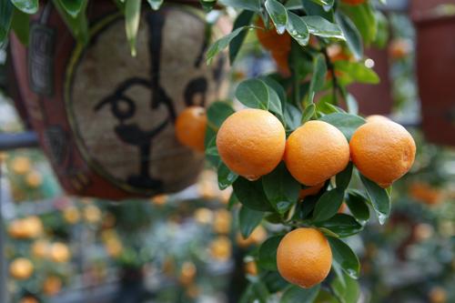 """""""Điểm mặt"""" những cây cảnh bonsai hút tiền dịp Tết Ất Mùi - 4"""