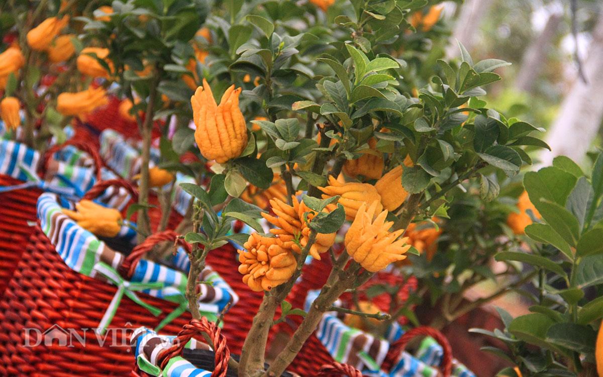 """""""Điểm mặt"""" những cây cảnh bonsai hút tiền dịp Tết Ất Mùi - 7"""
