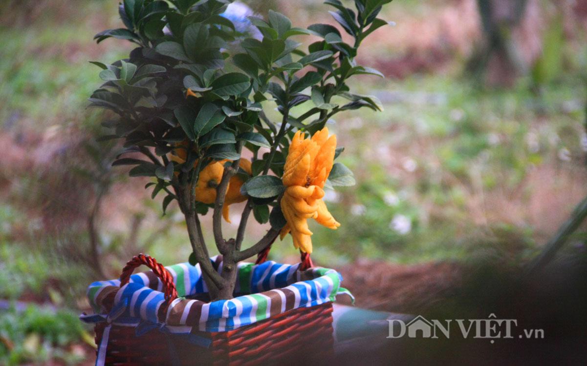 """""""Điểm mặt"""" những cây cảnh bonsai hút tiền dịp Tết Ất Mùi - 8"""