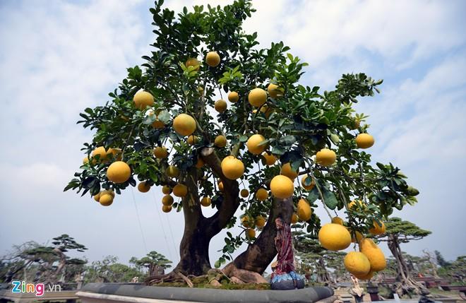 """""""Điểm mặt"""" những cây cảnh bonsai hút tiền dịp Tết Ất Mùi - 12"""
