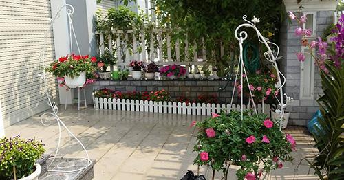 Ngắm vườn hoa tuyệt đẹp của nữ giảng viên ở TPHCM - 2