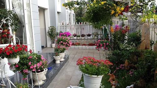 Ngắm vườn hoa tuyệt đẹp của nữ giảng viên ở TPHCM - 1