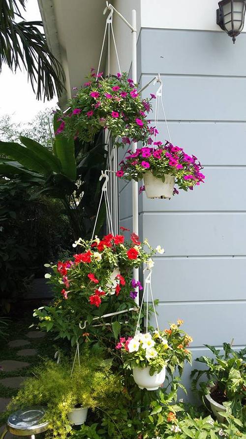 Ngắm vườn hoa tuyệt đẹp của nữ giảng viên ở TPHCM - 4