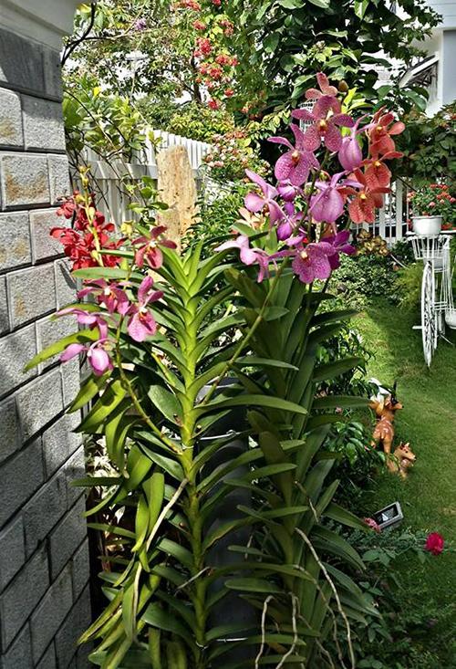 Ngắm vườn hoa tuyệt đẹp của nữ giảng viên ở TPHCM - 5