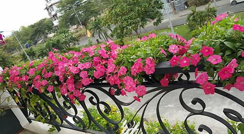 Ngắm vườn hoa tuyệt đẹp của nữ giảng viên ở TPHCM - 9
