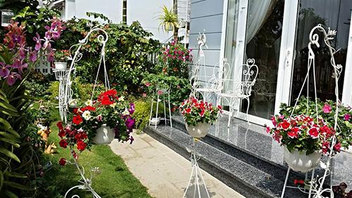 Ngắm vườn hoa tuyệt đẹp của nữ giảng viên ở TPHCM - 6