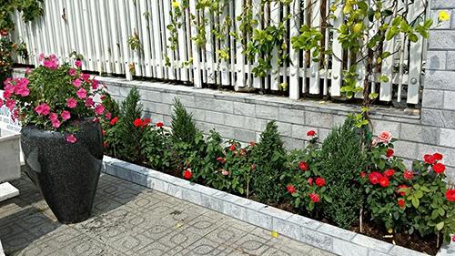 Ngắm vườn hoa tuyệt đẹp của nữ giảng viên ở TPHCM - 10