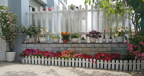 Ngắm vườn hoa tuyệt đẹp của nữ giảng viên ở TPHCM - 12
