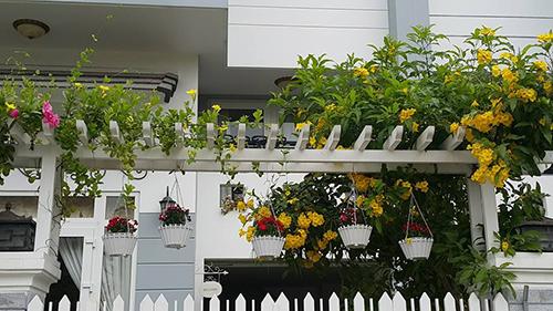 Ngắm vườn hoa tuyệt đẹp của nữ giảng viên ở TPHCM - 13
