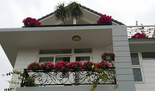 Ngắm vườn hoa tuyệt đẹp của nữ giảng viên ở TPHCM - 15