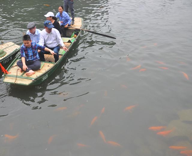 Du khách thích thú ngắm cá chép đỏ lạ ở Tràng An - 5