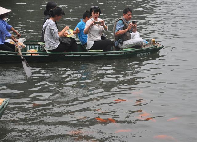 Du khách thích thú ngắm cá chép đỏ lạ ở Tràng An - 6
