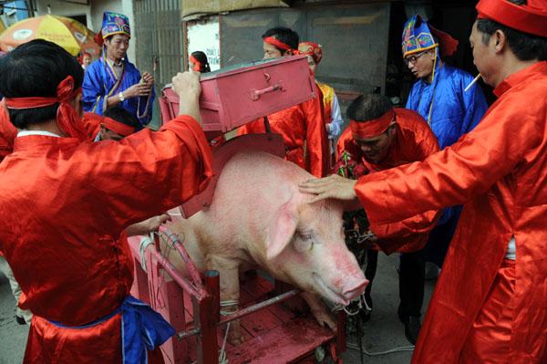 Ảnh: Dân Ném Thượng chém lợn giữa sân đình - 10