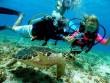 Những điểm lặn biển đẹp mê hồn tại Mỹ