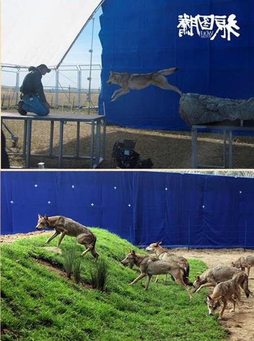 """Khám phá đoàn phim """"sống chung"""" với 35 chú sói - 10"""