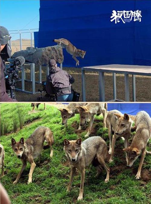 """Khám phá đoàn phim """"sống chung"""" với 35 chú sói - 5"""