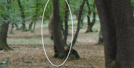"""Rùng mình với khu rừng """"quỷ"""" ở châu Âu - 2"""