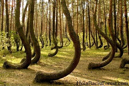 """Rùng mình với khu rừng """"quỷ"""" ở châu Âu - 3"""