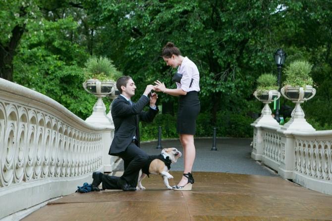 Khoảnh khắc cầu hôn tuyệt đẹp của các cặp đôi - 4